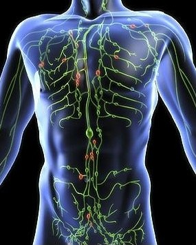 picture of lymphatic system